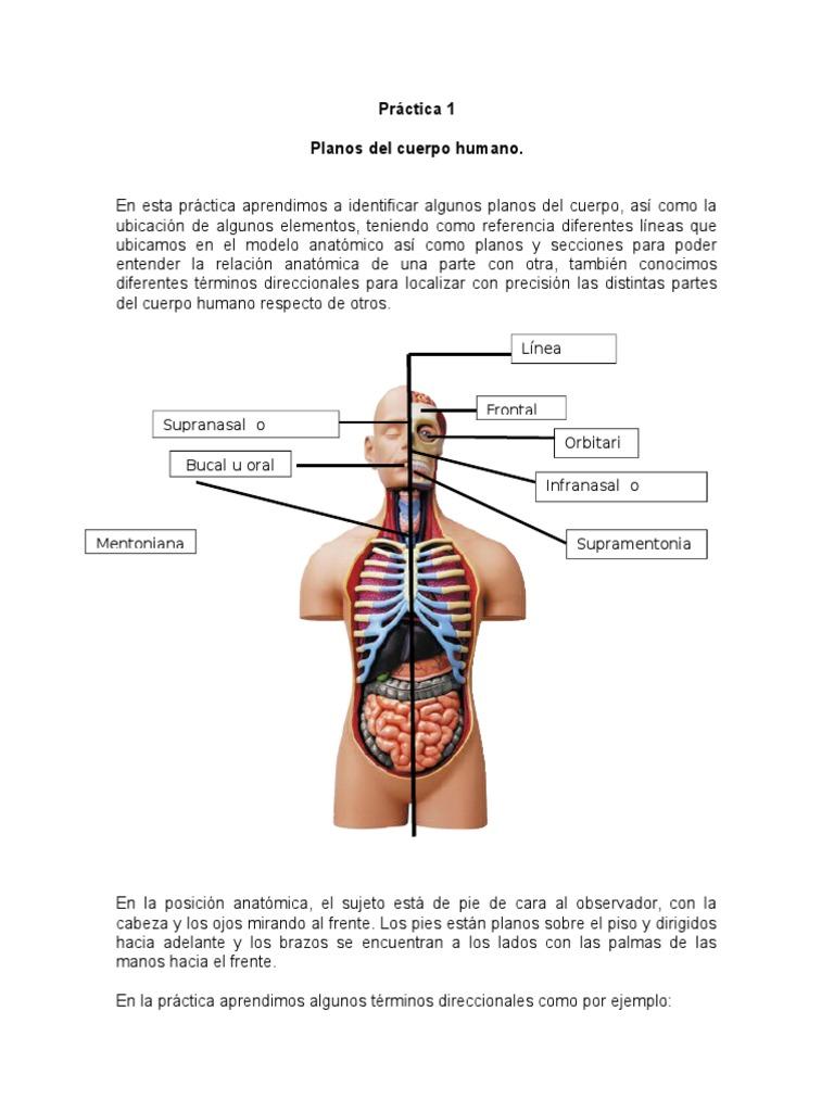 Anatomia Practica 1