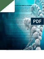 Extraccion de ADN en frutillas