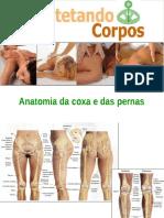 Anatomia Da Coxa e Pernas