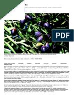 Como Plantar Oliveira - Globo Rural _ Como Plantar