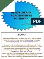 pengelolaan-agroekosistem-SAWAH