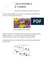 Adancimea de Plantare a Bulbilor de Toamna. _ Plant-shop