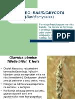 10 Basidiomycetes