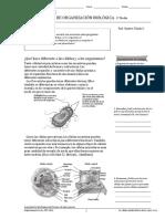 desdelaclulaalorganismo-140208150146-phpapp02