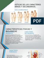 Caracteristicas de Los Caracteres Primarios y Secundarios