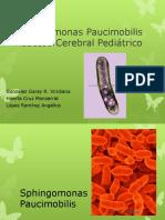Sphingomonas Paucimobilis Absceso Cerebral Pediátrico
