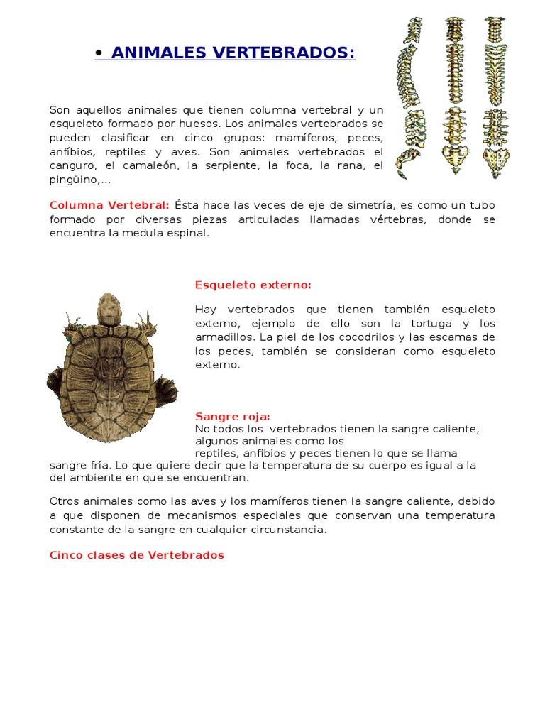 ANIMALES VERTEBRADOS y invertebrados.docx