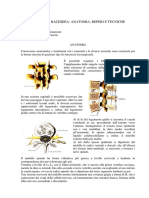 morvillo-anestesia-rachidea.pdf