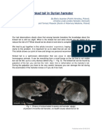 the issue of kinked tail in syrian hamster