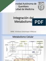 Tema 8- Integración del metabolismo
