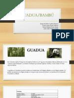 Exposicion Guadua