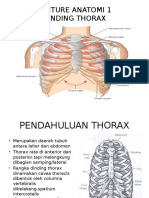 Lecture Anatomi Respirasi