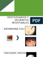 Protozorarios y Helmintos Intestinales