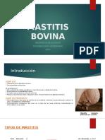 Informe Mastitis