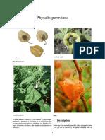 Physalis Peruviana o Aguaymanto