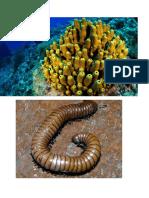 expocicion de biologuia 2.docx