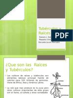 Tubérculos y Raíces