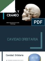 Anatomia de Orbita y Craneo