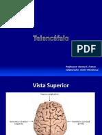09_telencefalo.pdf