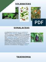 Familia Solanaceas