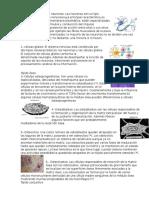 7 Tipos de Celulas