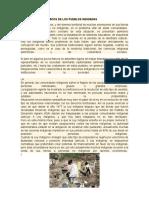 PROBLEMAS ECONOMICOS DE LOS PUEBLOS INDIGENAS.docx