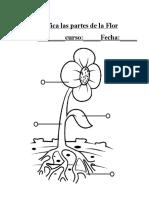 Identifica Partes de La Flor
