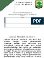 CAKRAM MUDIGAH BILAMINER