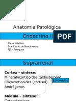 ENDOCRINO 2.pptx