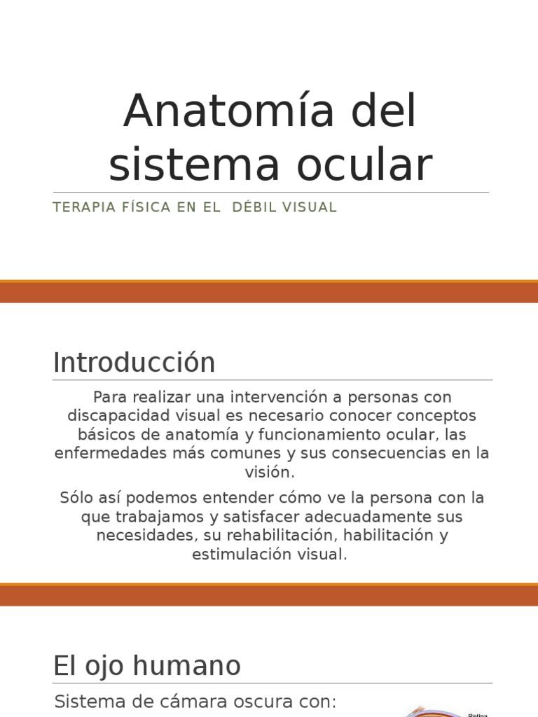 Anatomía del sistema ocular.pptx