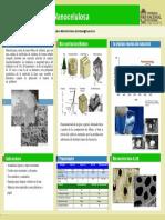 Poster Nano Celulosa
