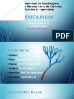 Penicillium Finished