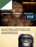Australopithecus (1)