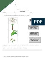 Guía ciclo de la planta