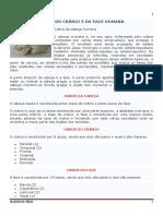Ossos_da_cabeça.pdf
