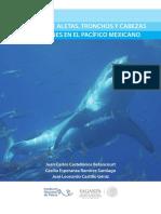 Catalogo Tiburones