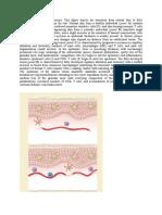 Development of psoriatic lesions.docx