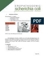 Enteropathogenic Escherichia coli - written report.pdf