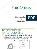 gametogenesis-151015164546-lva1-app6891