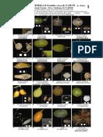 Frutos y Semillas de Ecuador