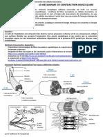 le_fonctionnement_des_cellules_musculaires_tc.pdf