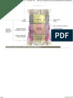 anatomiacorpuluiuman-34