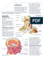 Muschii sceletici