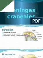 Meninges Craneales