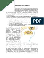 Organos Linfoides Primarios