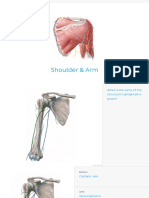 Muscle flash cards