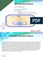 Notch Pathway