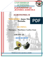 AGUACATE.doc