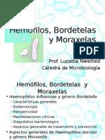 Hemofilos Bordetelas y Moraxella