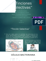 E6-Tinciones Selectivas